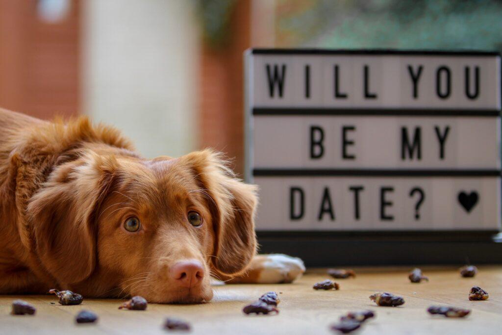 valentines menu bozeman 2019